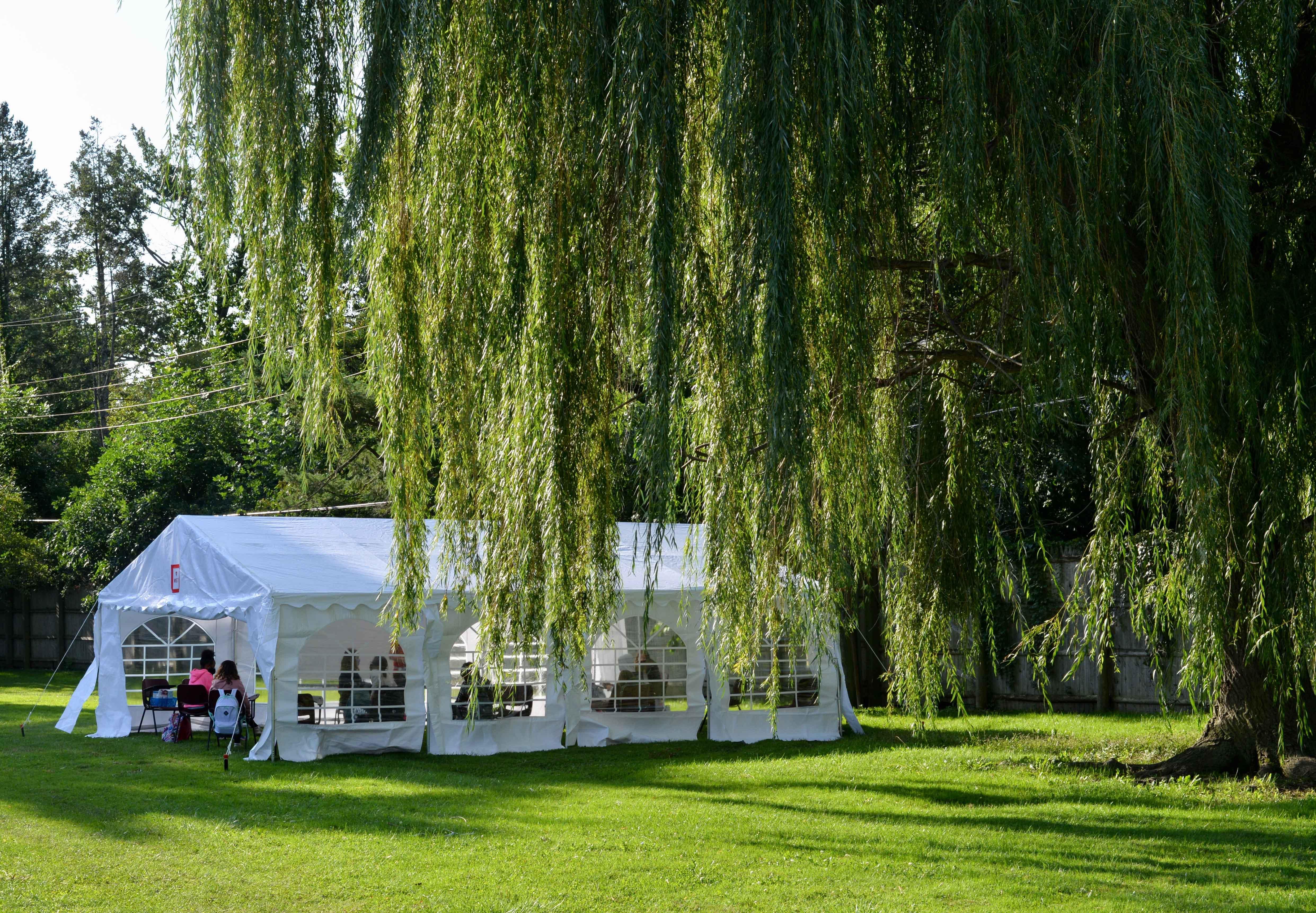 Willow tree tent
